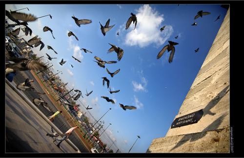 Square_of_Pigeons__Eminonu__by_oscarsnapshotter.jpg
